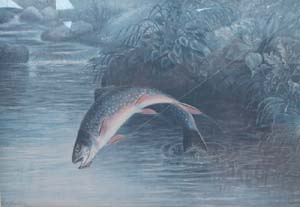 brook_trout_jump_sm