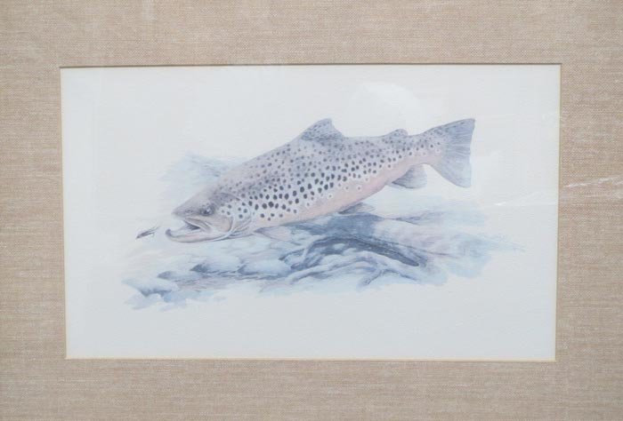 brown_trout_lg