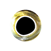 cooleye_yellow_silver_6mm_1sm
