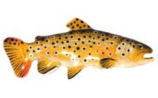 creative_castings_pin_painted_brown_trout.jpg