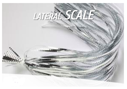 lateral_scale_sm