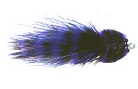 mfc_barred_marabou_toad_purple_black.jpg