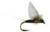 pfg_hackle_wing_mayfly_BWO.jpg
