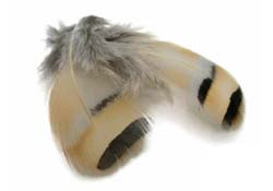 tie_fh_french_partridge_feather