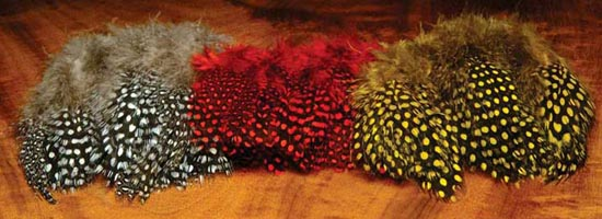 tie_fh_guinea_feather