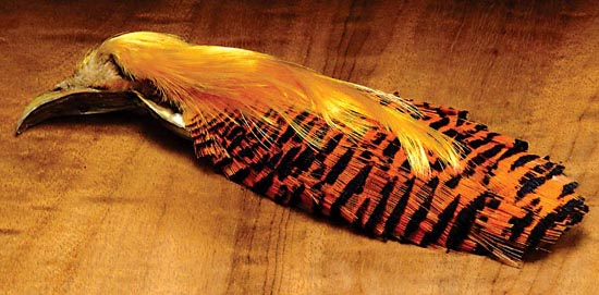 tie_fh_pheasant_golden_head_neck.jpg