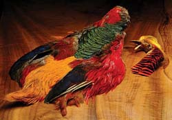 tie_fh_pheasant_golden_no_tail_sm.jpg