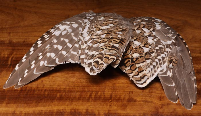 tie_fh_sharptail_wing_pair_lg.jpg