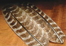 tie_fh_turkey_wing_quill_mottled_oak_sm.jpg