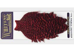 whiting_american_hen_cape