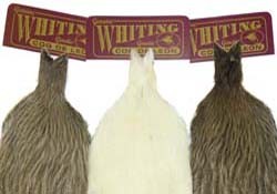 whitings_coqdeleon_hen_cape
