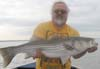 Dale Matthews nabs another striper